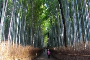 Reasons why you should visit Sagano Bamboo Forest